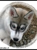 Louska (3 mois)