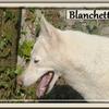 Blanchette 4