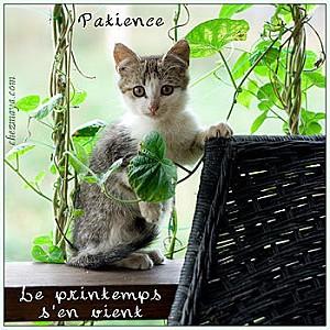 Le-printemps-s--en-vient-patience-chat-carte-.jpg