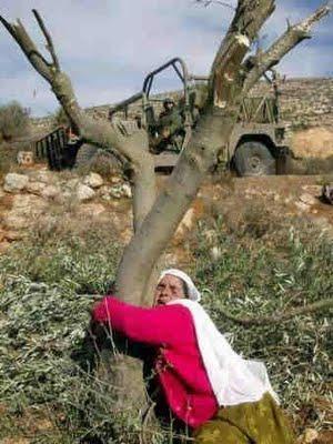 دولة فلسطينية مؤقتة