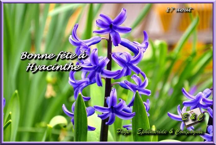 L'image contient peut-être: fleur, texte et nature