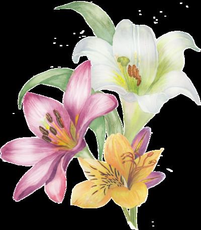 fleur fruit vintage