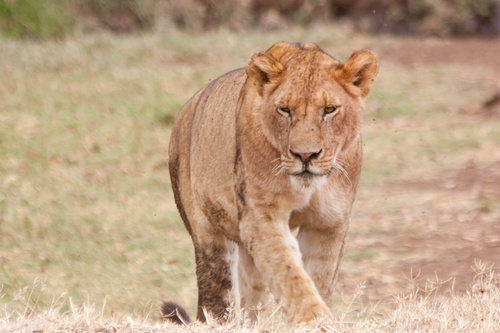 Jour 8, en route pour le cratère du Ngorongoro