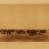 12The buffalo plains
