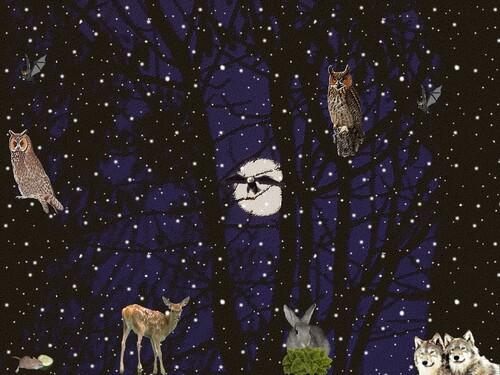 Fonds d'écran Animaux de la forêt