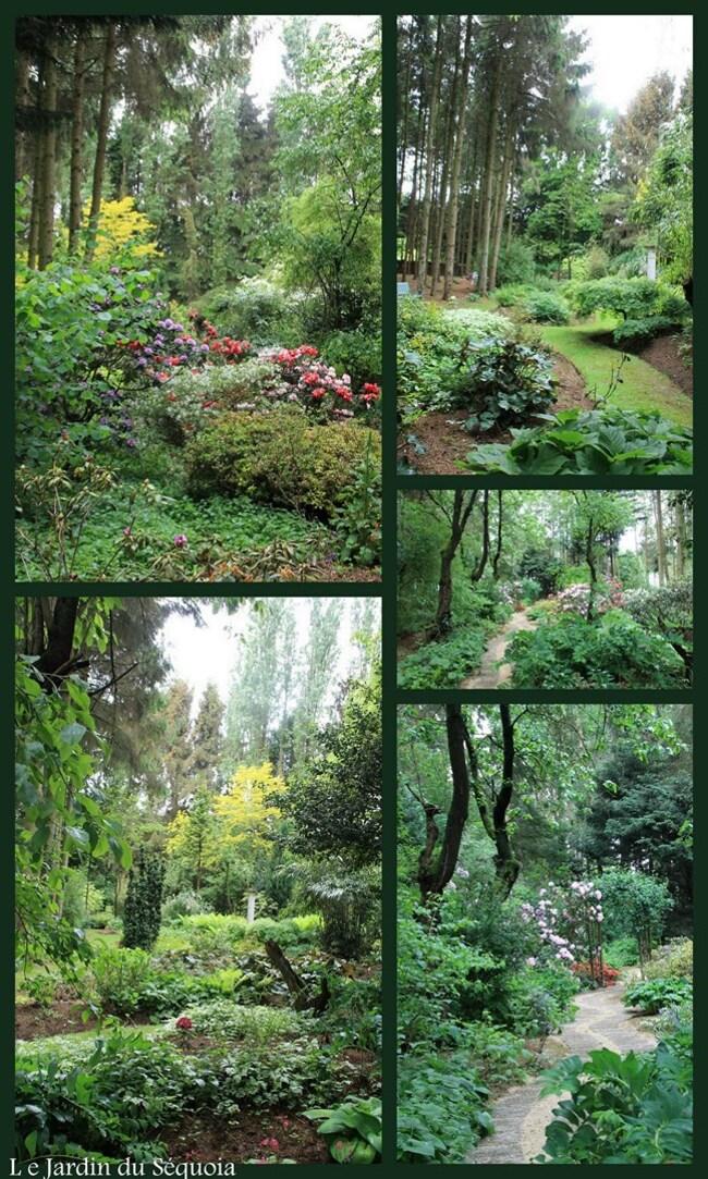 Le Jardin du Séquoia