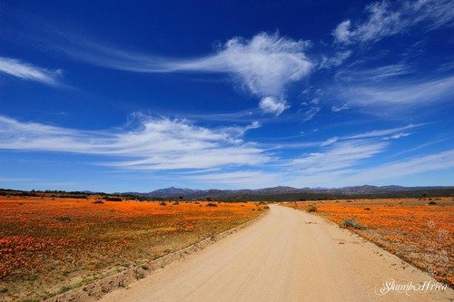 Namaqua National Park, again...