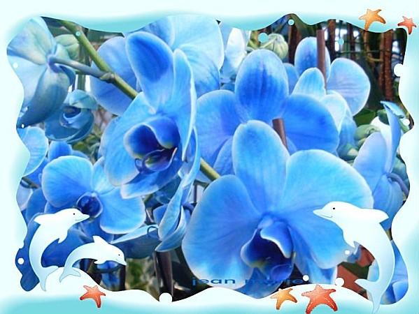 creation-orchidee-lejardindejeanmarie.jpg
