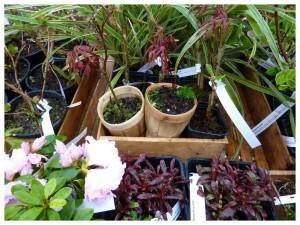 Botaniques de Chèvreloup avril2010023