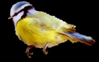 Tubes oiseaux des îles