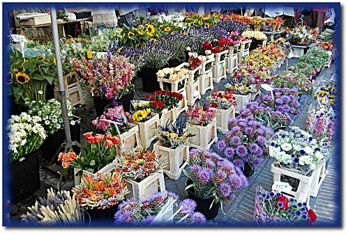 marche-fleurs-3.JPG