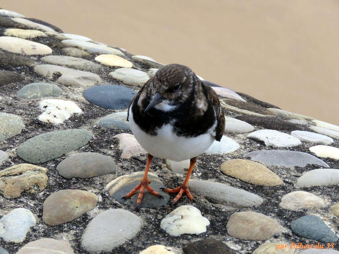un bel oiseau de mer