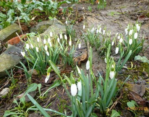Le printemps n'est pas loin!