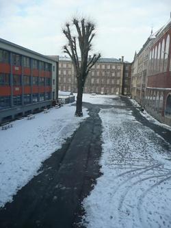 Sous la neige, ... à Tokyo comme à Douai