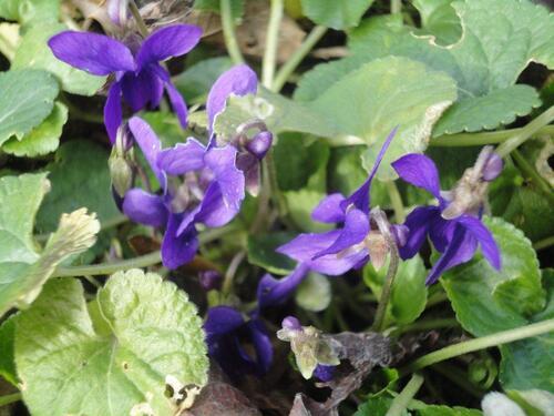 fleurs du mois de février