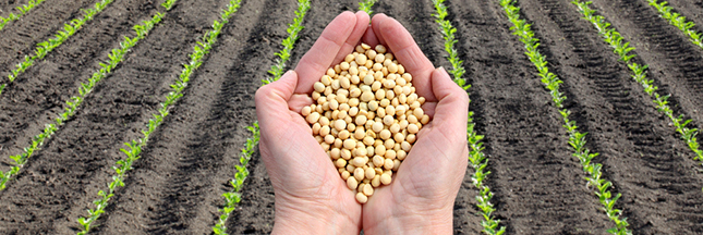 L'Europe autorise un soja OGM fabriqué par Monsanto