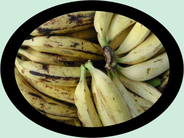 Potage bananier