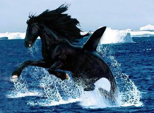 le cheval-orque