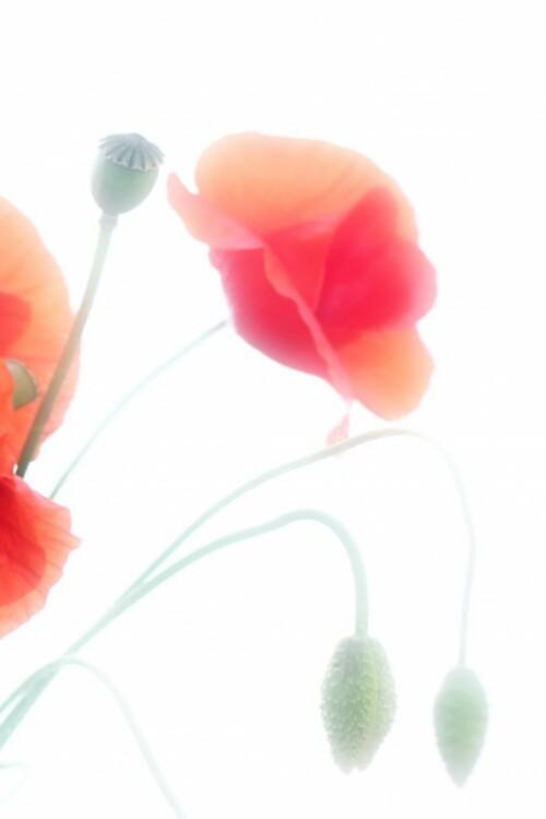 Fond Florale