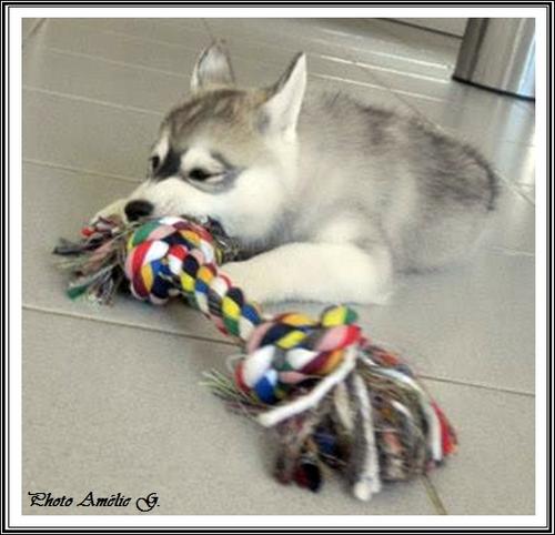 Que de jouets ! (17 février 2015)