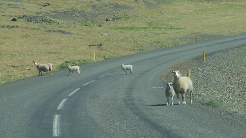 Pelotes: Islande