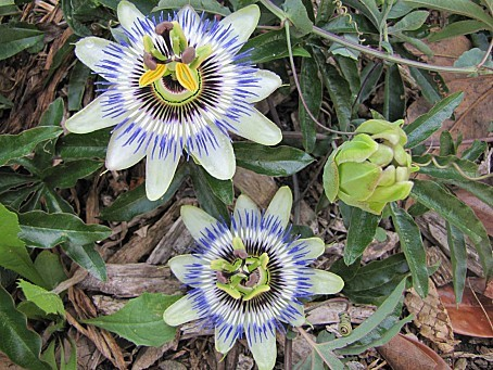 fleurs-5033.JPG