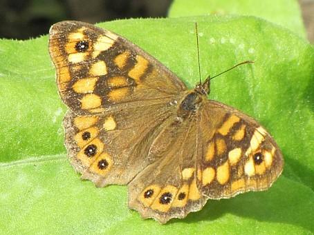 les-papillons-6452.JPG