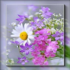 Misted fleur