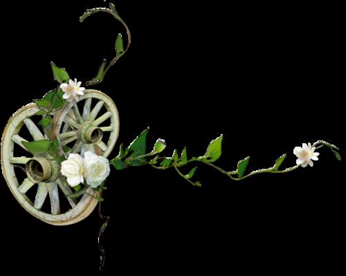 Fleurs cultivées : Bleuet