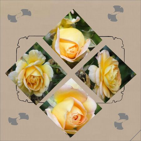 Roses_3_couleurs