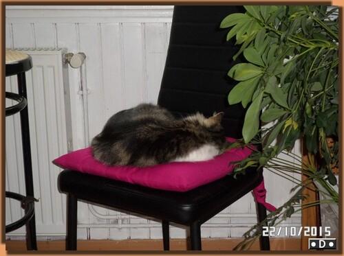 Quand chat dort ......
