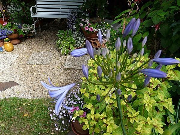 Banc--Pots-fleuris-8-8-06-11-006.jpg
