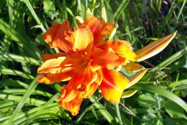 xa3 - Une fleur