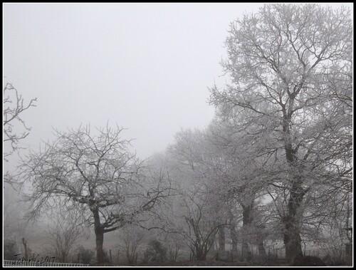 Un matin d'hiver à Trédias