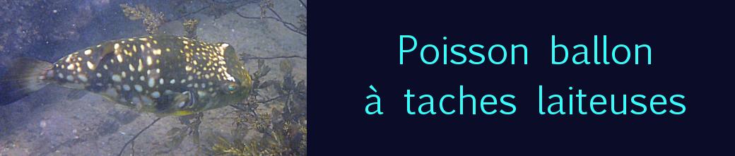 chelonodon patoca