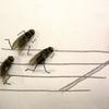 Les mouches à l\'arrivée !