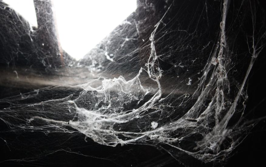 FORYOURS Halloween D/éCorations G/éAnt Toile DAraign/éE Araign/ée en Peluche Araign/éE Accessoires Effrayant Halloween Cour Porte Et D/éCor Ext/éRieur 30//60//90//125 150cm