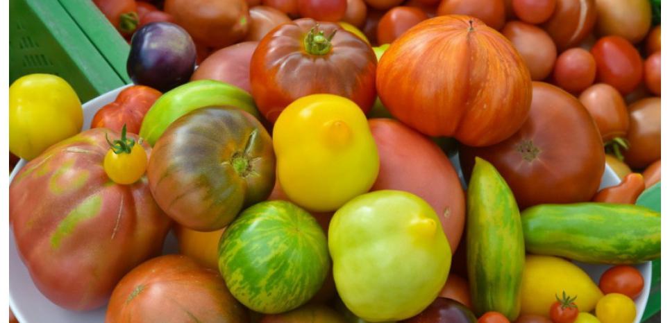 Peu calorique car riche en eau, la tomate possède pourtant des qualités nutritionnelles étonnantes. © AFP PHOTO / DPA/ PATRICK PLEUL /GERMANY OUT