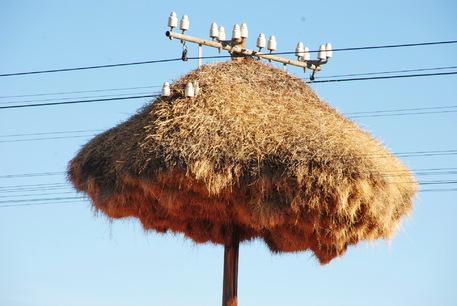 Un étrange nid