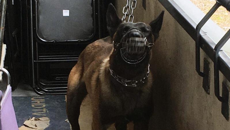 Calvaire terminé pour 4 chiens de sécurité battus au Blanc-Mesnil