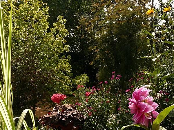 Roses-B-Dahlia
