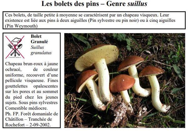 Quelques bolets de la forêt châtillonnaise (seconde partie)