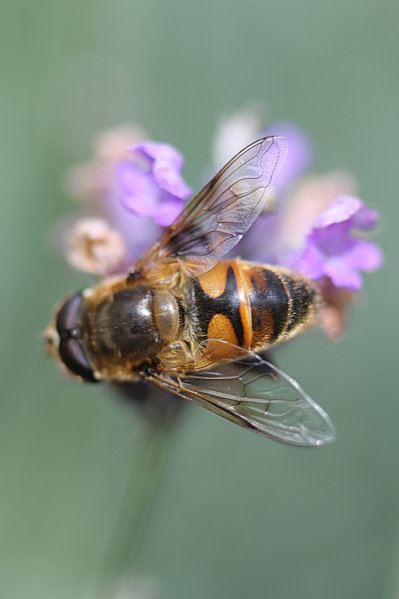 macros-insectes 3599