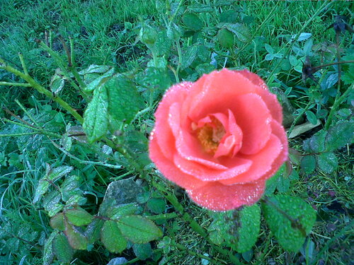 Fleur de novembre/Flower of november