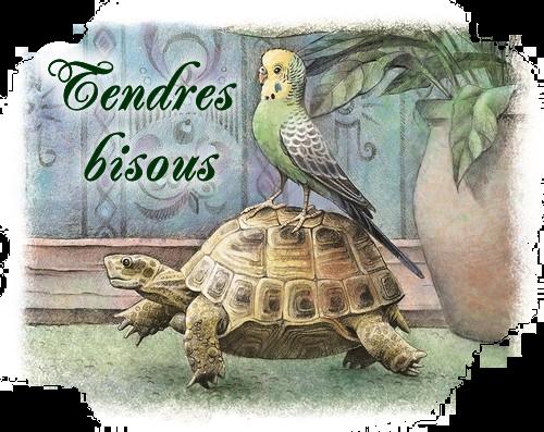 Mots de tortues