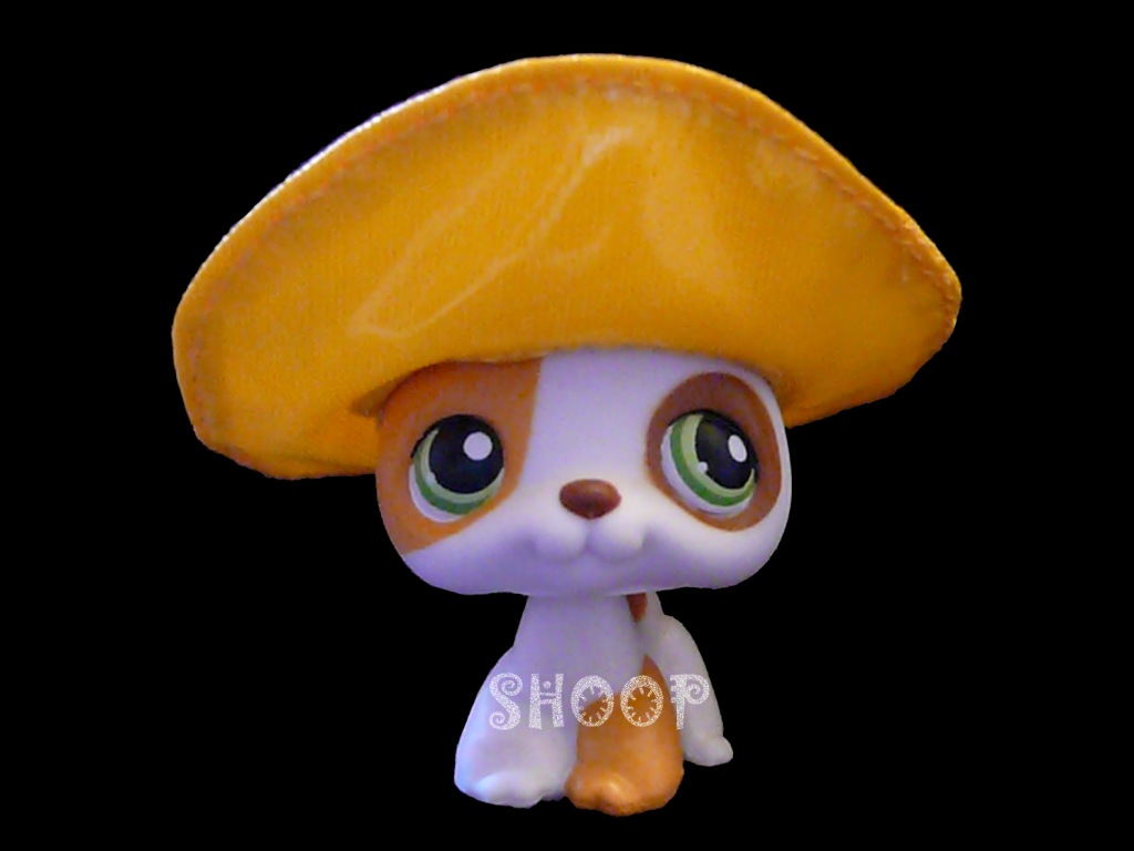 LPS 127