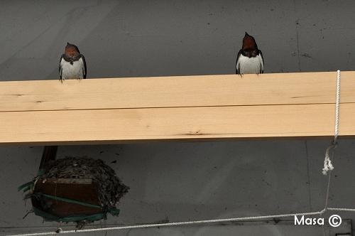 oiseaux birds Fukuoka