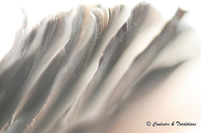 Légèreté de plume