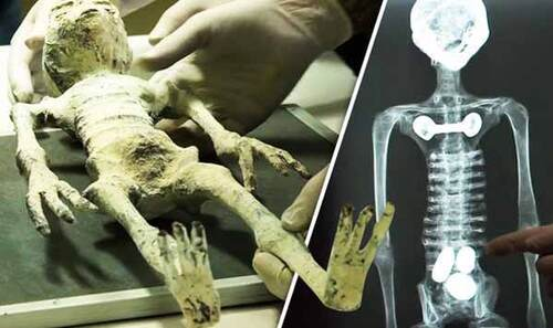 L'affaire des momies tridactyles de Nazca