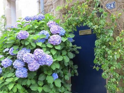 http://lancien.cowblog.fr/images/Fleurs3/IMG0092.jpg